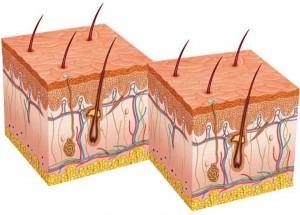 o que são foliculos capilares transplante de cabelo